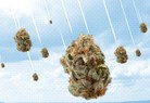 Buds Delivery Featured Marijuana Dispensary image