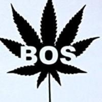 Boston Headys  Marijuana Clinic image