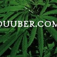 Duuber - Cumberland Marijuana Dispensary featured image