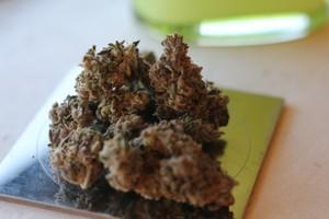 Mint Chocolate Chip Marijuana Strain product image