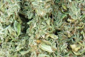 ACDC Marijuana Strain product image