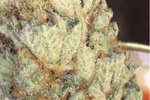 Agent Orange Marijuana Strain product image