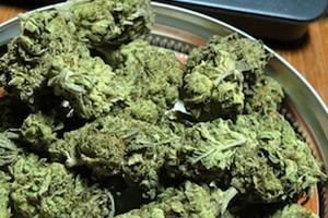 Platinum Animal Cookies Marijuana Strain product image