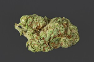 Bay 11 Marijuana Strain product image