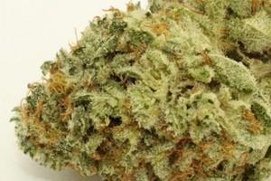 Black Diamond Marijuana Strain product image
