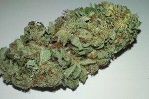 Blue City Diesel Marijuana Strain product image