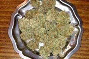 Blueberry Marijuana Strain product image