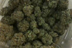 Blueberry Kush Marijuana Strain product image