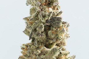 Breakfast Kush Marijuana Strain product image