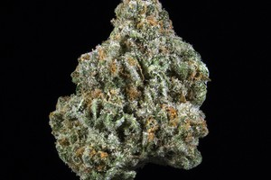 Buddha's Sister Marijuana Strain product image