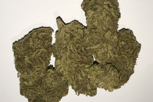 Chem Dawg Marijuana Strain product image