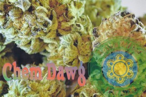 Chemdawg #4 Marijuana Strain product image