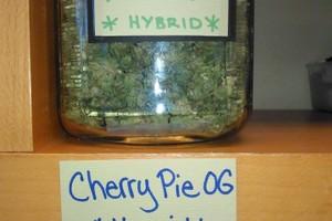 Cherry OG Marijuana Strain product image