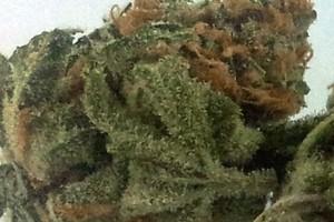 Cinderella 99 Marijuana Strain product image