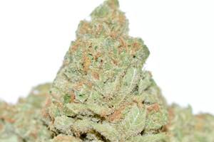 Clementine Marijuana Strain product image