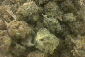 Clifford Marijuana Strain product image
