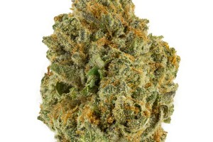Critical Mass Marijuana Strain product image