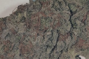Crunch Berries Marijuana Strain product image
