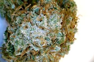 Daybreak Marijuana Strain product image