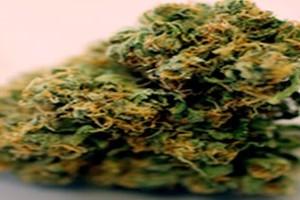 Diablo OG Kush Marijuana Strain product image