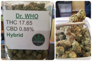 Dr. Who Marijuana Strain product image