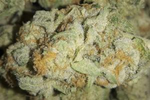 Fruit Punch Marijuana Strain product image