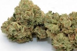 Ghost OG Marijuana Strain product image