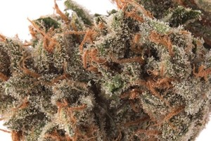 Ghost Train Haze Marijuana Strain product image