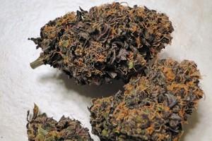 God's Gift Marijuana Strain product image