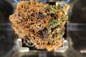 Granddaddy  Purple Marijuana Strain product image