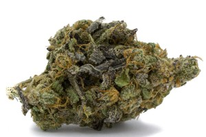 Irish Cream Marijuana Strain product image
