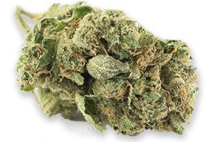 Jack Herer Marijuana Strain product image