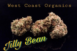 Jilly Bean Marijuana Strain product image