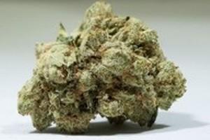 Kosher Kush Marijuana Strain product image