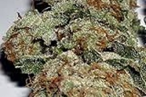 Lee Roy Marijuana Strain product image