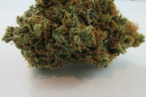 Lemon Haze Marijuana Strain product image