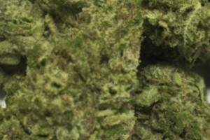 Lemon Skunk Marijuana Strain product image