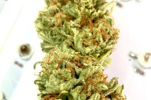 Lemon Sour Diesel Marijuana Strain product image