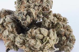 King Louie XIII Marijuana Strain product image