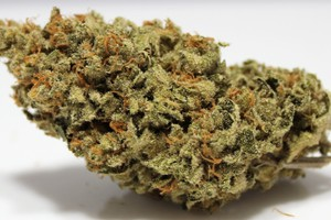 LSD Marijuana Strain product image