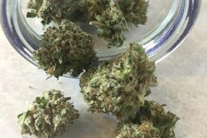Master Kush Marijuana Strain product image