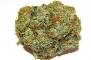 Northern Lights Marijuana Strain product image