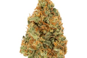 Orange Crush Marijuana Strain product image