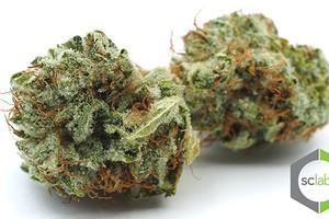 White Fire OG (WiFi OG) Marijuana Strain product image