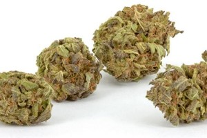 Purple Gorilla Marijuana Strain product image