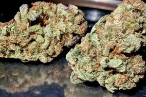 Purple Urkle Marijuana Strain product image