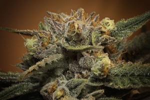 Alien Rock Candy Marijuana Strain product image