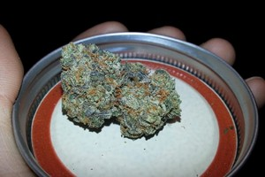 Skywalker OG Kush Marijuana Strain product image