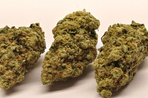 Skywalker Marijuana Strain product image