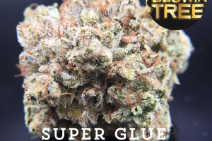 Super Kush Marijuana Strain product image